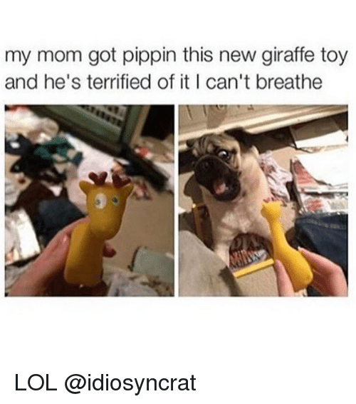 Pippin: my mom got pippin this new giraffe toy  and he's terrified of it I can't breathe LOL @idiosyncrat