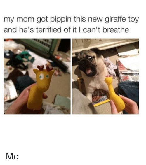 Pippin: my mom got pippin this new giraffe toy  and he's terrified of it I can't breathe Me