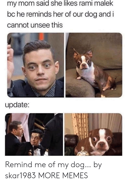 unsee: my mom said she likes rami malek  bc he reminds her of our dog and i  cannot unsee this  update: Remind me of my dog… by skar1983 MORE MEMES