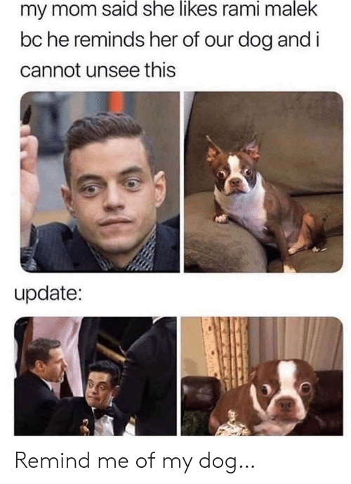 unsee: my mom said she likes rami malek  bc he reminds her of our dog and i  cannot unsee this  update: Remind me of my dog…