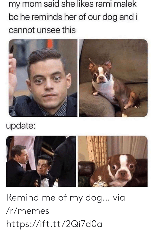 Memes, Mom, and Her: my mom said she likes rami malek  bc he reminds her of our dog and i  cannot unsee this  update: Remind me of my dog… via /r/memes https://ift.tt/2Qi7d0a
