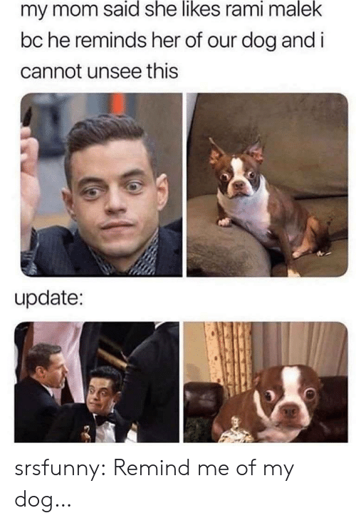 unsee: my mom said she likes rami malek  bc he reminds her of our dog and i  cannot unsee this  update: srsfunny:  Remind me of my dog…
