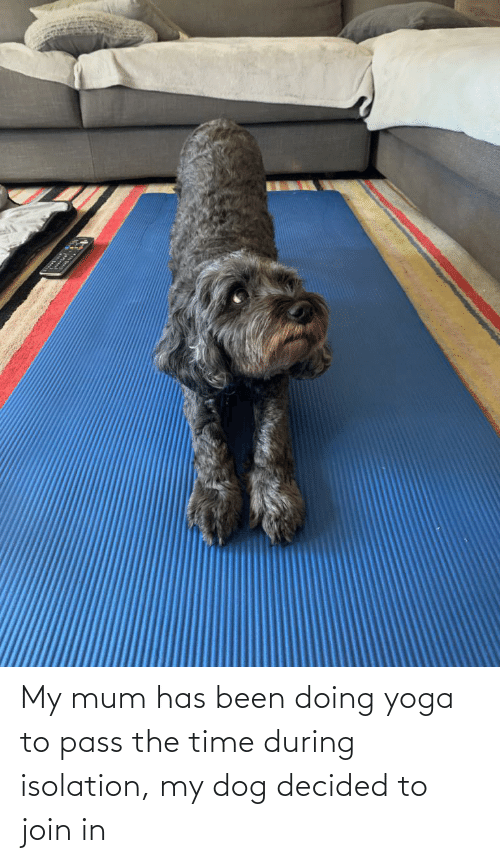 Aww Memes: My mum has been doing yoga to pass the time during isolation, my dog decided to join in