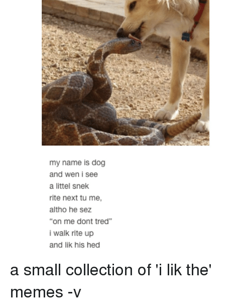 "Memes, 🤖, and Dog: my name is dog  and wen i see  a littel snek  rite next tu me,  altho he sez  ""on me dont tred""  i walk rite up  and lik his hed a small collection of 'i lik the' memes -v"
