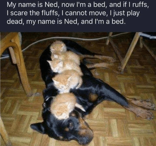 Scare, Play, and Name: My name is Ned, now I'm a bed, and if I ruffs,  I scare the fluffs, I cannot move, I just play  dead, my name is Ned, and I'm a bed.