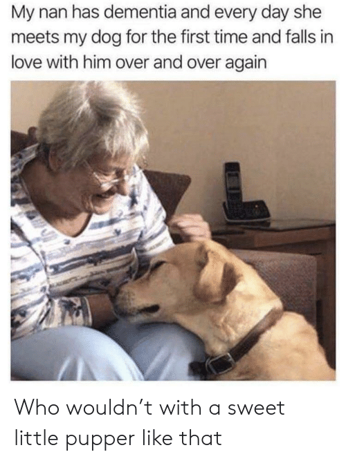 Love, Dementia, and Time: My nan has dementia and every day she  meets my dog for the first time and falls in  love with him over and over again Who wouldn't with a sweet little pupper like that