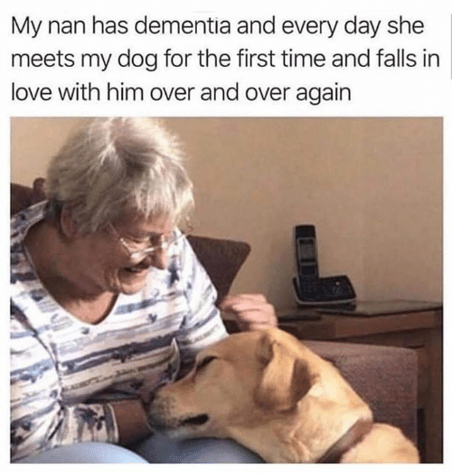 Love, Memes, and Dementia: My nan has dementia and every day she  meets my dog for the first time and falls in  love with him over and over again