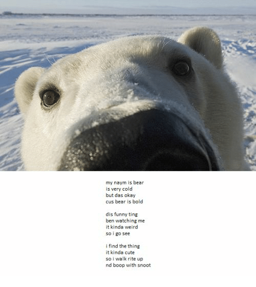Cute, Funny, and Weird: my naym is bear  is very cold  but das okay  cus bear is bold  dis funny ting  ben watching me  it kinda weird  so i go see  i find the thing  it kinda cute  so i walk rite up  nd boop with snoot