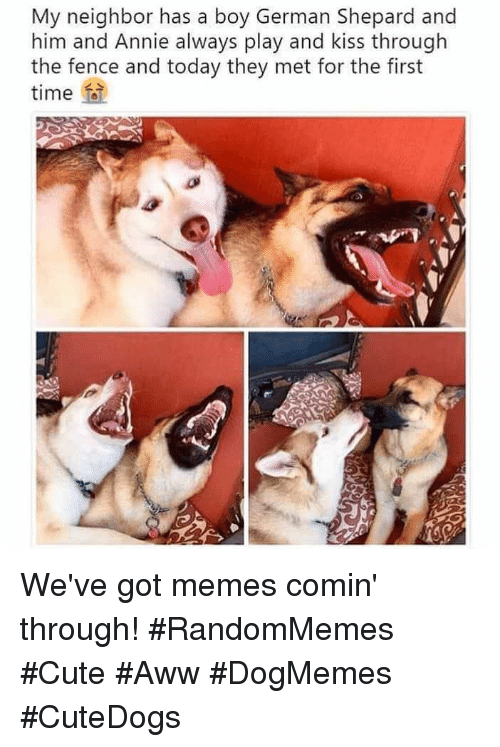 Aww, Cute, and Memes: My neighbor has a boy German Shepard and  him and Annie always play and kiss through  the et for the first  fence and today they m  time fa We've got memes comin' through! #RandomMemes #Cute #Aww #DogMemes #CuteDogs