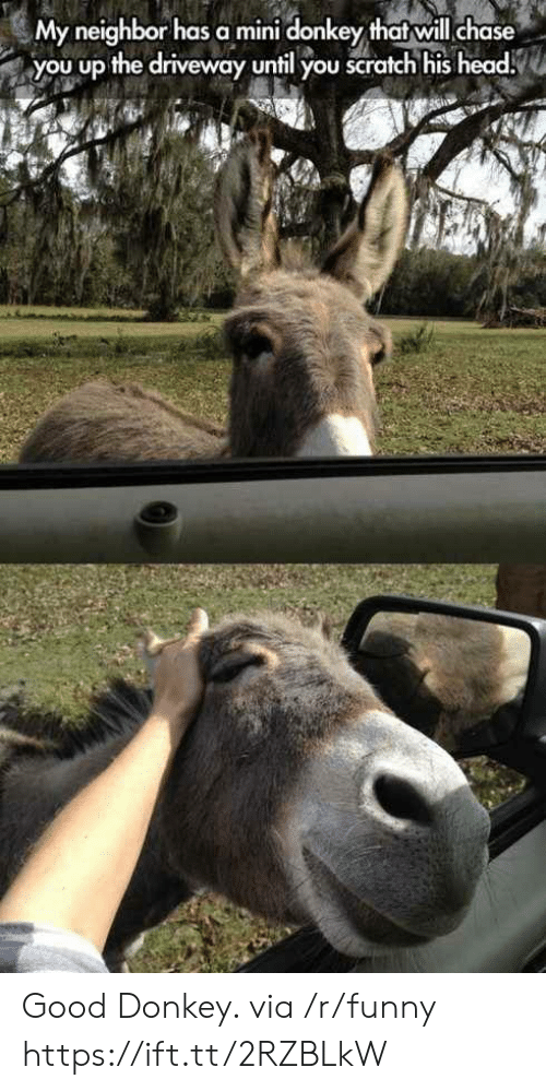 Chase You: My neighbor has a mini donkey thatwill chase  you up the driveway until you scratch his head Good Donkey. via /r/funny https://ift.tt/2RZBLkW