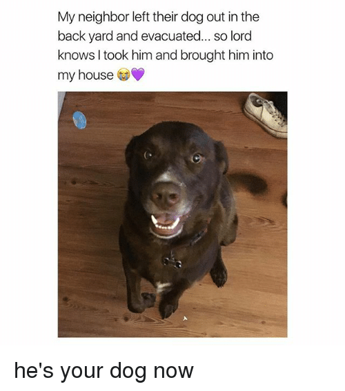 My House, House, and Girl Memes: My neighbor left their dog out in the  back yard and evacuated... so lord  knows I took him and brought him into  my house  C. he's your dog now