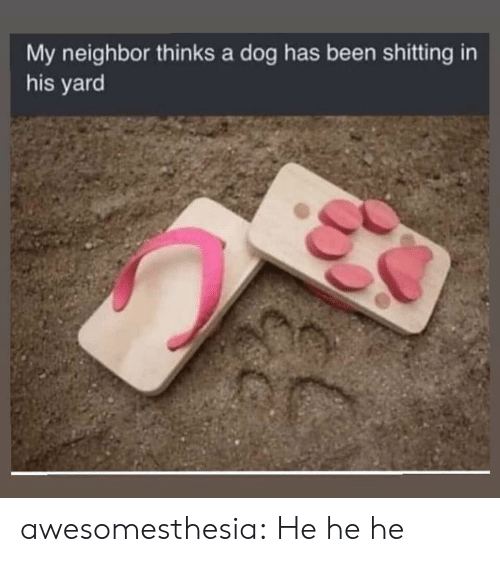 Dog Has: My neighbor thinks a dog has been shitting in  his yard awesomesthesia:  He he he
