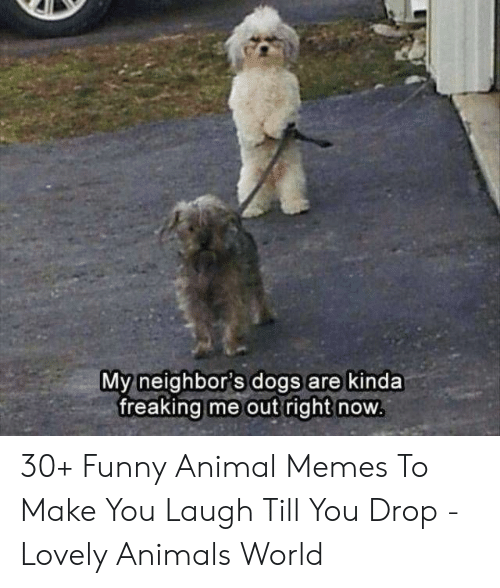 funny animal memes: My neighbor's dogs are kinda  freaking me out right now 30+ Funny Animal Memes To Make You Laugh Till You Drop - Lovely Animals World