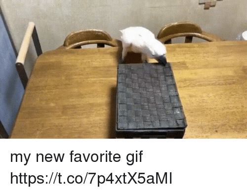 Gif, Girl Memes, and New: my new favorite gif https://t.co/7p4xtX5aMI