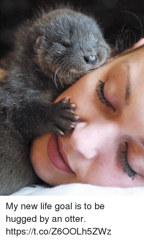 Life Goal: My new life goal is to be hugged by an otter. https://t.co/Z6OOLh5ZWz