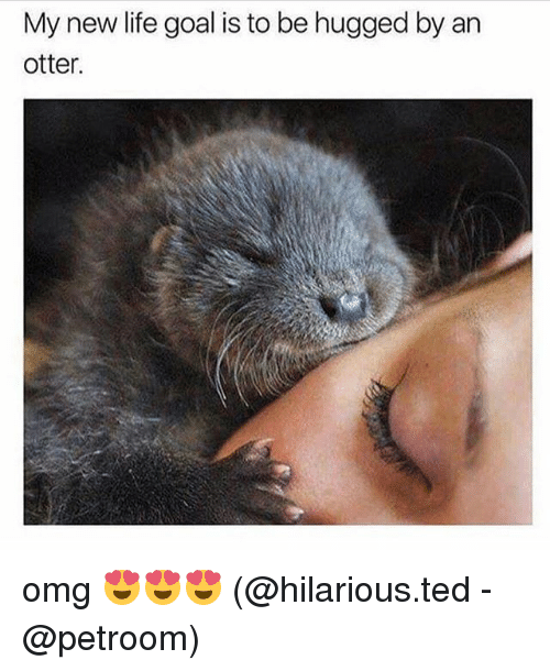 Life, Memes, and Omg: My new life goal is to be hugged by an  otter. omg 😍😍😍 (@hilarious.ted - @petroom)