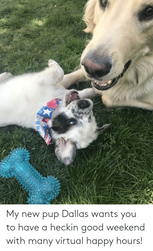 Heckin Good: My new pup Dallas wants you to have a heckin good weekend with many virtual happy hours!