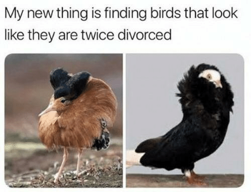 Birds: My new thing is finding birds that look  like they are twice divorced