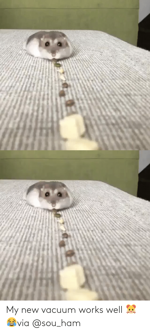 Vacuum: My new vacuum works well 🐹😂via @sou_ham