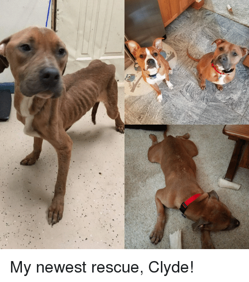 Doggo, Newest, and  Clyde: My newest rescue, Clyde!