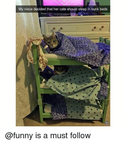 Cats, Funny, and Bunk Beds: My niece decided that her cats should sleep in bunk beds @funny is a must follow