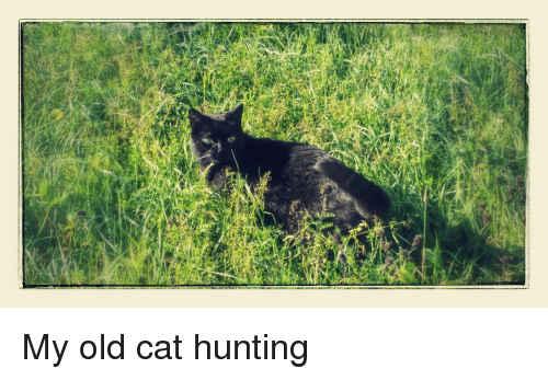 Hunting, Old, and Cat: My old cat hunting