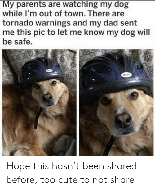 Cute, Dad, and Parents: My parents are watching my dog  while I'm out of town. There are  tornado warnings and my dad sent  me this pic to let me know my dog will  be safe. Hope this hasn't been shared before, too cute to not share