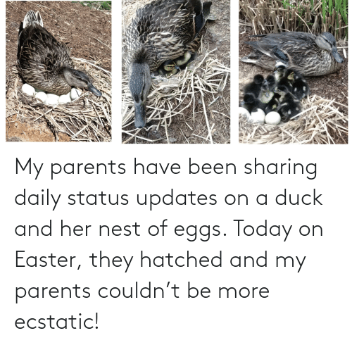Nest: My parents have been sharing daily status updates on a duck and her nest of eggs. Today on Easter, they hatched and my parents couldn't be more ecstatic!