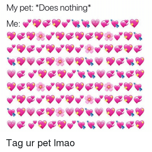 Funny, Lmao, and Pet: My pet: *Does nothing*  Me Tag ur pet lmao