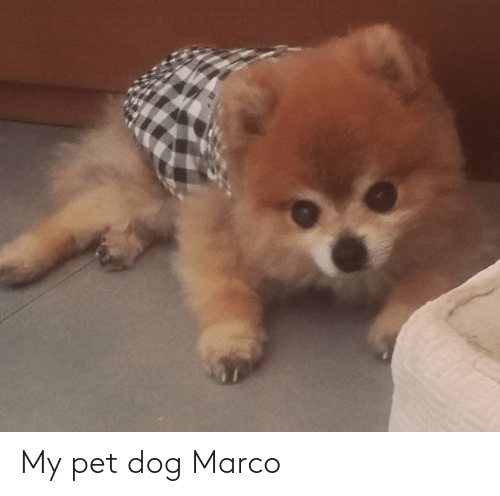 Marco: My pet dog Marco