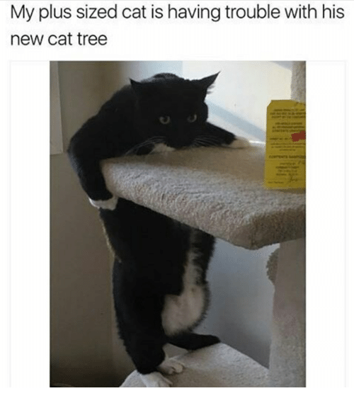 Memes, Tree, and 🤖: My plus sized cat is having trouble with his  new cat tree  SO