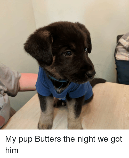 Pup, Got, and Him: My pup Butters the night we got him