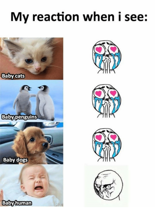 Cats, Dogs, and Memes: My reaction when i see:  Baby cats  Baby dogs  Babyhuman