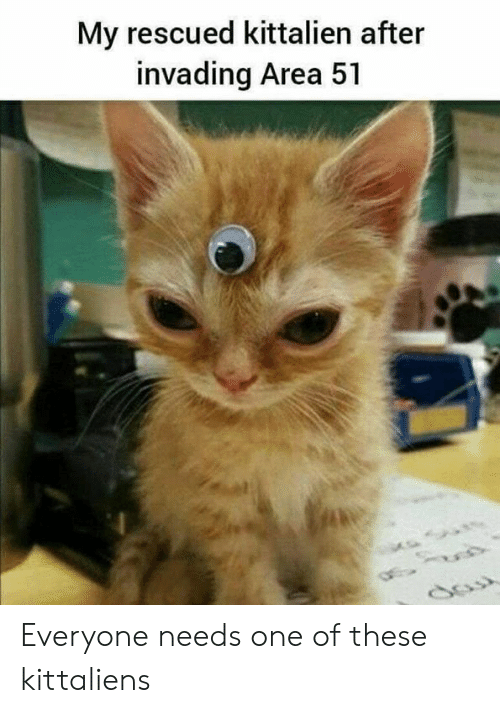 Memes, 🤖, and Area 51: My rescued kittalien after  invading Area 51 Everyone needs one of these kittaliens