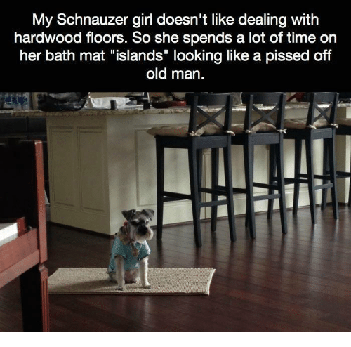"Memes, Old Man, and Girl: My Schnauzer girl doesn't like dealing with  hardwood floors. So she spends a lot of time on  her bath mat ""islands"" looking like a pissed off  old man."