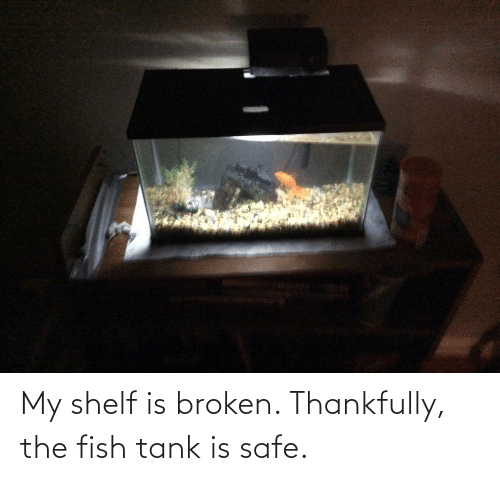 tank: My shelf is broken. Thankfully, the fish tank is safe.