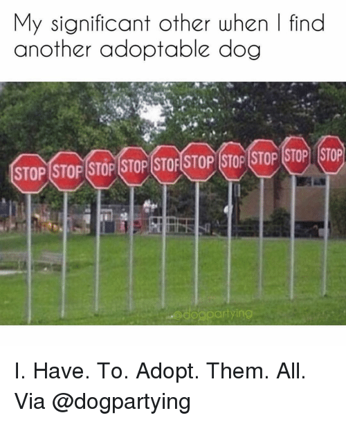Memes, 🤖, and Another: My significant other when | find  another adoptable dog  STOP STOP STOP STOP STOF STOP STOP STOP STOP STOP  dogpar  tying I. Have. To. Adopt. Them. All. Via @dogpartying