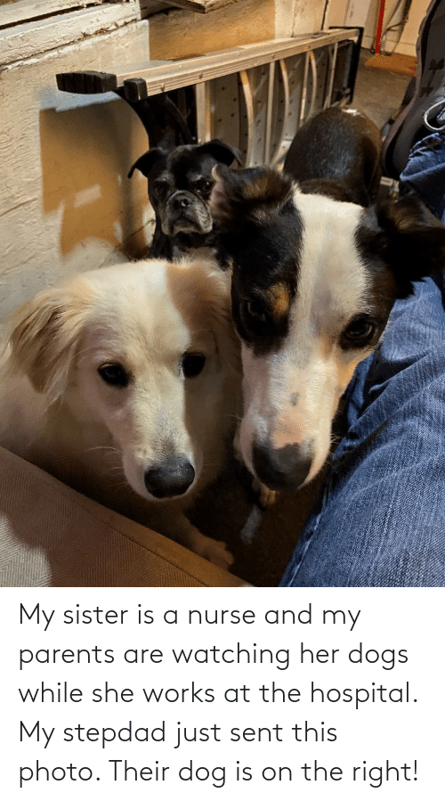 Aww Memes: My sister is a nurse and my parents are watching her dogs while she works at the hospital. My stepdad just sent this photo. Their dog is on the right!