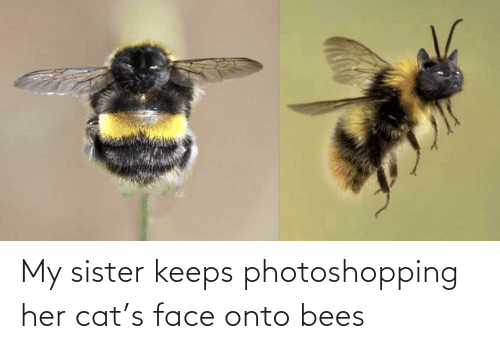 sister: My sister keeps photoshopping her cat's face onto bees