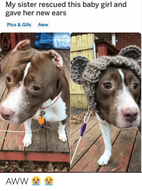 Aww, Grumpy Cat, and Gifs: My sister rescued this baby girl and  gave her new ears  Pics & Gifs Aww AWW 😭 😭