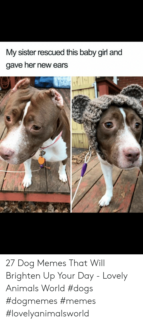 ears: My sister rescued this baby girl and  gave her new ears 27 Dog Memes That Will Brighten Up Your Day - Lovely Animals World #dogs  #dogmemes #memes #lovelyanimalsworld