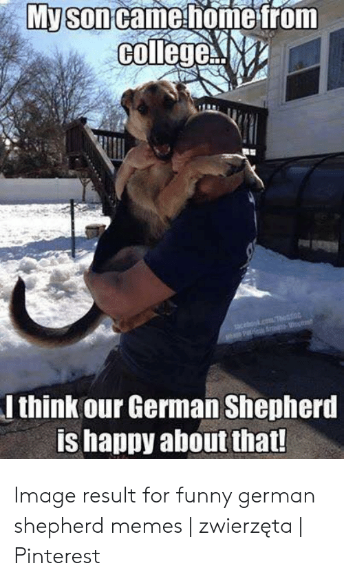 College, Funny, and Memes: My son came home from  college  acok.cT  h Pe Sro m  I think our German Shepherd  is happy about that! Image result for funny german shepherd memes | zwierzęta | Pinterest