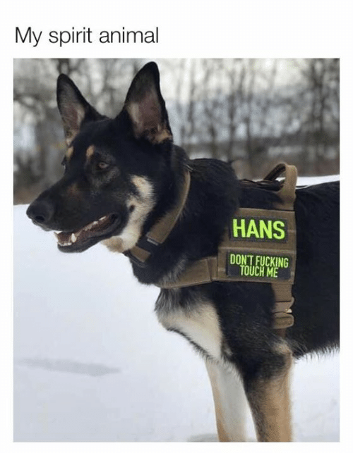 Dank, Fucking, and Animal: My spirit animal  HANS  DON'T FUCKING  TOUCH ME