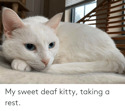 deaf: My sweet deaf kitty, taking a rest.