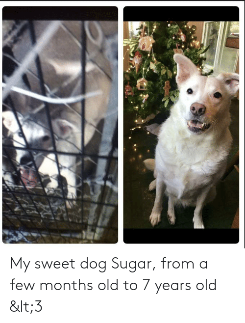 Sugar: My sweet dog Sugar, from a few months old to 7 years old <3