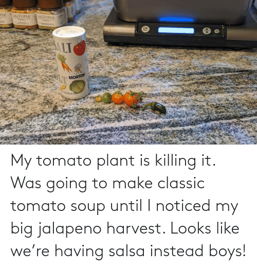 Looks Like: My tomato plant is killing it. Was going to make classic tomato soup until I noticed my big jalapeno harvest. Looks like we're having salsa instead boys!