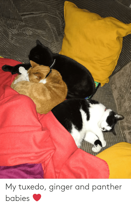 ginger: My tuxedo, ginger and panther babies ❤️