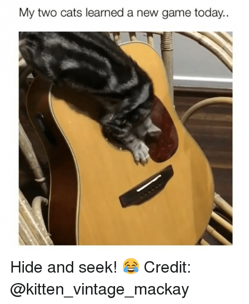 Cats, Memes, and Game: My two cats learned a new game today.. Hide and seek! 😂 Credit: @kitten_vintage_mackay