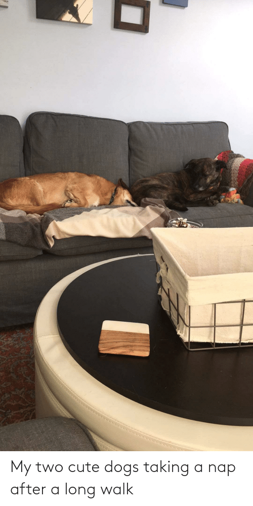 cute dogs: My two cute dogs taking a nap after a long walk