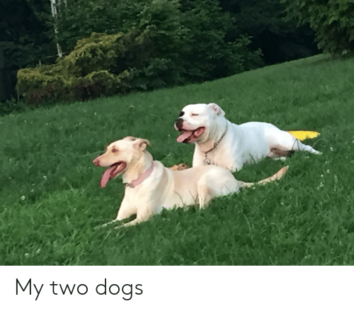 Dogs,  Two, and Two Dogs: My two dogs